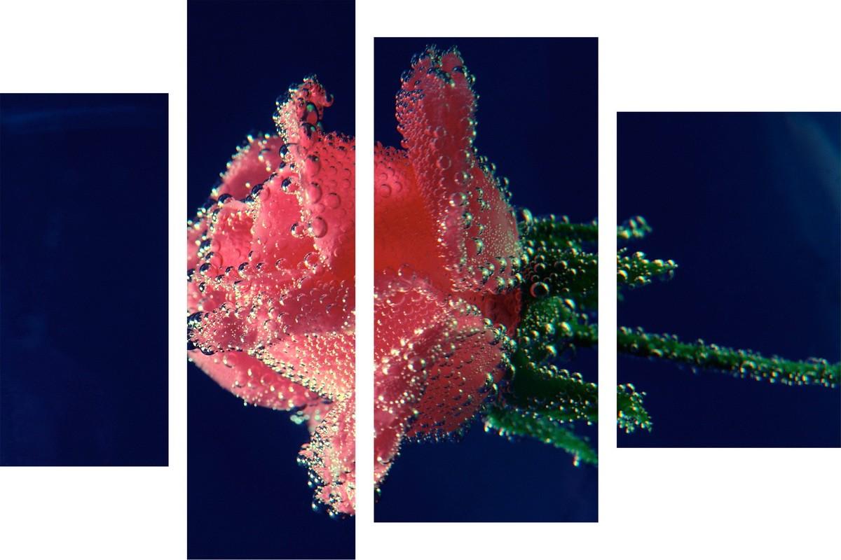 Роза и миллион пузырьков