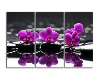 Фиолетовые цветы на камушках